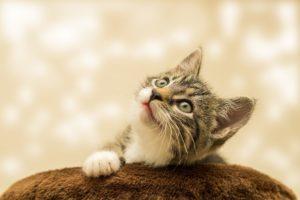 In der Schwangerschaft ist für alle Katzenbesitzerinnen der Toxoplasmose-Test zu empfehlen. Unsere Frauenärzte beraten Sie gerne.